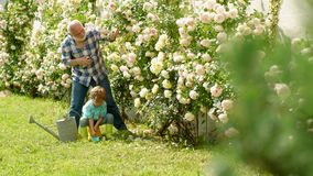 Grandfather with grandson gardening together. I love our moments in the countryside - remember time. Gardening hobby. Child are in the garden watering the rose stock footage