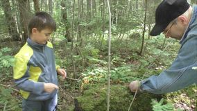 Grandfather with grandson gather mushrooms stock video footage