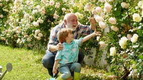 Grandfather and grandson. His enjoys talking to grandfather. Generation. Gardener in the garden. Grandfather and. Grandson in beautiful garden. Planting flowers stock video