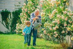 Grandfather and grandson. Old and Young. Concept of a retirement age. lifestyle and family life. Bearded Senior gardener. In an urban garden royalty free stock photography
