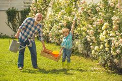 Grandfather and grandson. Old and Young. Concept of a retirement age. Little helper in garden. Bearded Senior gardener. In an urban garden royalty free stock images