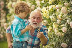 Grandfather and grandson. Old and Young. Concept of a retirement age. Little helper in garden. Senior gardener. Child. Are in the garden watering the rose stock photo