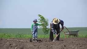 Grandfather and grandson plant a tree together, remove the gap generation. UHD 4K stock video
