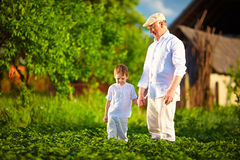 Grandfather and grandson together on their homestead, among potatoes rows Stock Photos