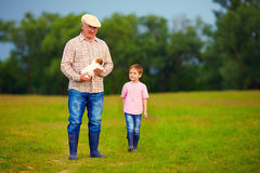 Grandfather and grandson walking through the green field, with puppy in hands Stock Images