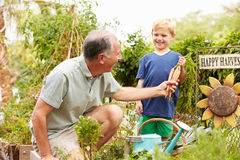 Grandfather And Grandson Working On Allotment Royalty Free Stock Photography