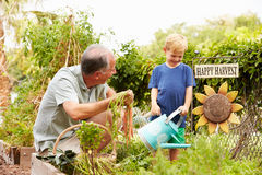 Grandfather And Grandson Working On Allotment Stock Images