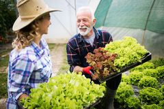 Grandfather growing organic vegetables with grandchildren and family at farm stock photos