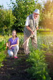 Grandfather with his granddaughter in the vegetable garden Royalty Free Stock Image