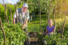 Grandfather with his granddaughter in the vegetable garden Stock Image