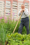 Grandfather leaning on shovel Stock Images