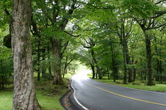 Grandfather Mountain Stock Images