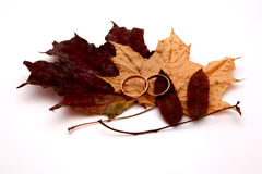 Grandfather's wedding. Wedding rings against autumn leaves Royalty Free Stock Images