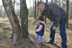 Grandfather showing granddaughter how birch sap is flowing in th Royalty Free Stock Images