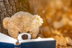 the grandfather sits on fallen autumn leaves near a tree and read a book stock image