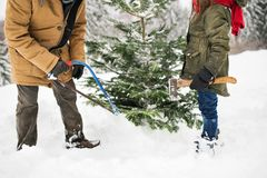 Grandfather and small girl getting a Christmas tree in forest. Unrecognizable grandfather and a small girl getting a Christmas tree in forest. Winter day Royalty Free Stock Photo