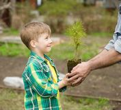 Grandfather transmits to his grandson cedar sapling royalty free stock photo