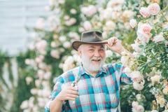 Grandfather working in garden over roses background, Bearded Senior gardener in an urban garden. Happy farmer in cowboy. Hat having fun on field stock photo