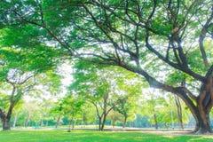 Grandi alberi Fotografie Stock