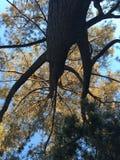 Grandi alberi Immagine Stock
