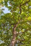 Grandi alberi accanto alla strada Fotografia Stock Libera da Diritti