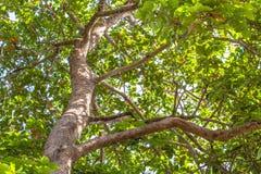 Grandi alberi accanto alla strada Fotografie Stock Libere da Diritti