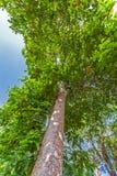 Grandi alberi accanto alla strada Immagine Stock Libera da Diritti