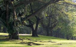 Grandi alberi al tramonto Fotografie Stock Libere da Diritti