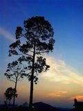 Grandi alberi della siluetta con la stella di fucilazione Fotografia Stock