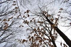 Grandi alberi fotografati da sotto un giorno soleggiato a Cleveland, Ohio, U.S.A. Fotografia Stock Libera da Diritti