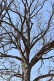 Grandi alberi fotografati da sotto un giorno soleggiato a Washington, U.S.A. Fotografia Stock Libera da Diritti