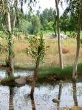 Grandi alberi, lungo acqua di pioggia immagine stock