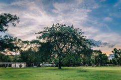 Grandi alberi nella sera all'ora dorata fotografia stock