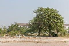 Grandi alberi sul prato fotografie stock libere da diritti