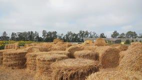 Grandi balle rotonde di fieno su un'azienda agricola vicino al campo dei girasoli Inseguimento della macchina fotografica stock footage