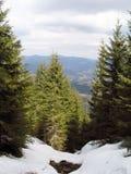 Grandi bei alberi nelle montagne Fotografie Stock