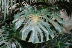Grandi belle foglie scolpite nella priorità alta Fotografia Stock Libera da Diritti