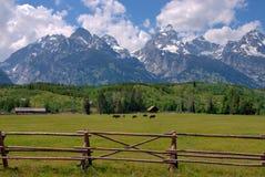 Grandi cavalli di Teton Fotografia Stock Libera da Diritti