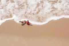Grandi conchiglia e stelle marine sulla sabbia della spiaggia Immagine Stock Libera da Diritti