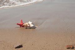 Grandi conchiglia e stelle marine sulla sabbia della spiaggia Fotografia Stock