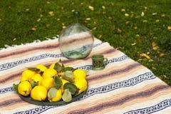 Grandi cotogne gialle in un vassoio verde del metallo fotografie stock libere da diritti