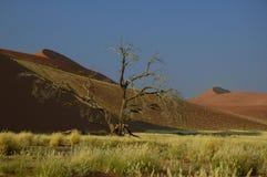 Grandi dune (deserto di Namib) Fotografia Stock Libera da Diritti