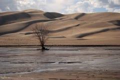 Grandi dune di sabbia Fotografie Stock Libere da Diritti