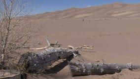 Grandi dune di sabbia di Colorado video d archivio