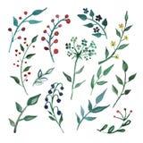 Grandi elementi stabiliti dell'acquerello - wildflower, erbe, foglia giardino della raccolta, fogliame selvaggio, fiori, rami illustrazione di stock
