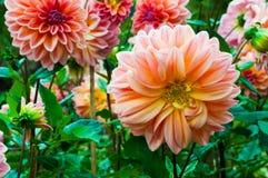 Grandi fiori fotografia stock