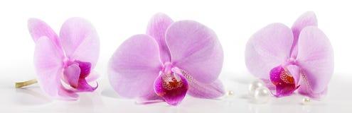 Grandi fiori dell'orchidea su un fondo bianco Bello fondo floreale del fondo… con i fiori variopinti Fotografie Stock Libere da Diritti