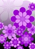 Grandi fiori viola dentellare Fotografia Stock Libera da Diritti