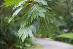 Grandi foglie Fotografia Stock Libera da Diritti