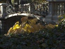 Grandi foglie gialle dell'arbusto nei raggi del sole fotografia stock